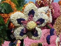 Цветочный парад